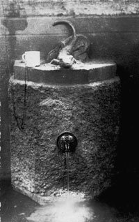 Baldones sēravots ar ķirzakas skulpūru