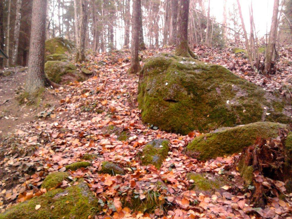 Nomaļa taciņa Pokaiņu mežā
