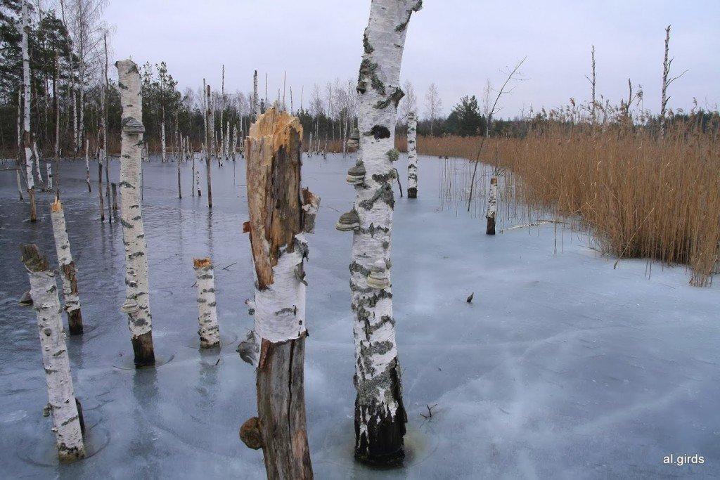 Peldamos gabalus 1. martā vēl klāja bieza ledus kārta