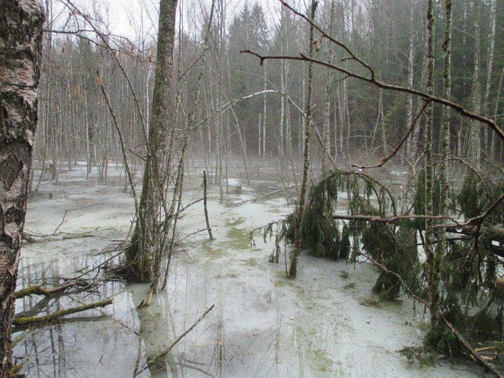 Migla purvā virs ledus