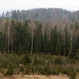 Embūtes meža ainava