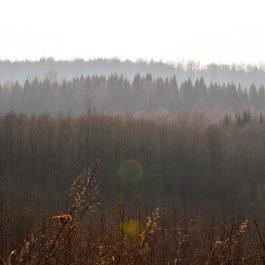 Embūtes mežu ainava no kalna muguras pie Induļa kapa akmens