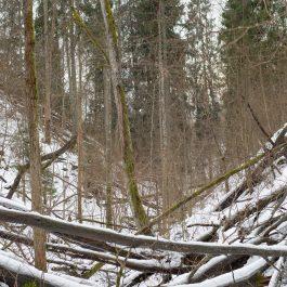 Kokiem aizkritusi grava ziemā.