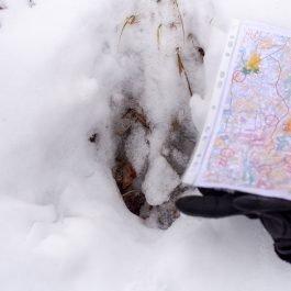 Aļņa pēda sniegā ar A4 karti blakus mērogam.