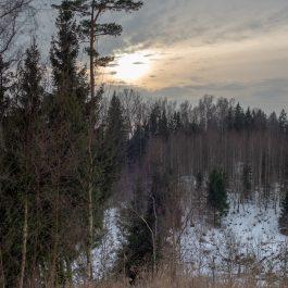 Saule riet virs meža ziemā.